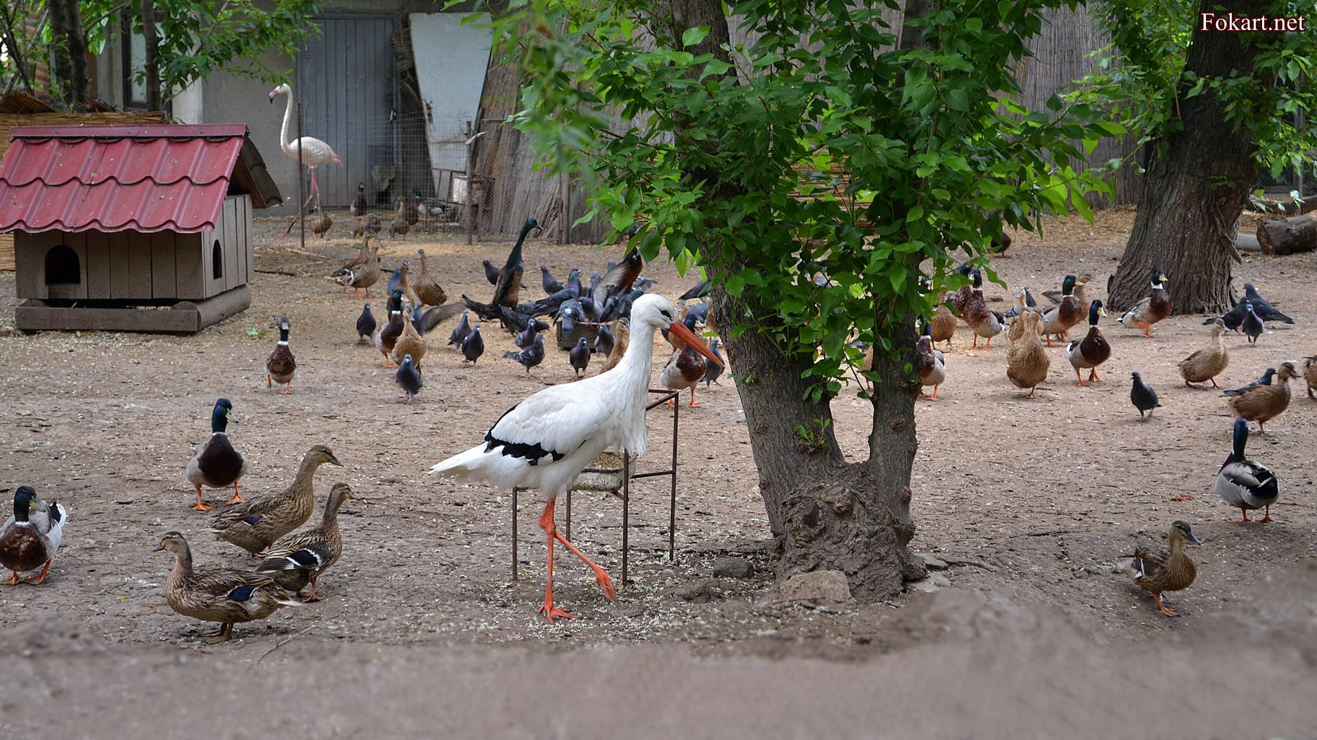 Аист, утки, голуби, фламинго на птичьем дворе зоопарка.