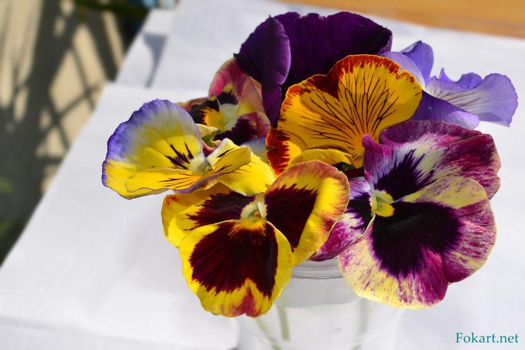 Маленький букетик разноцветных виол