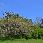 Цветущие деревья, ярко-зелёные трава и кустарники в апреле. Фото-картина.