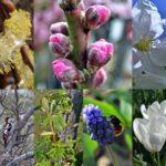 Весенний коллаж - 9 картинок весны