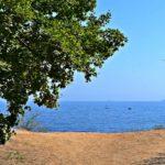 Ветки над морем. морской пейзаж