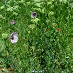 В майских травах