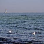 Две чайки на воде, море и катамаран