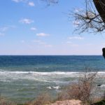 Дерево и голые кустарники над морем в конце марта