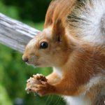 Забавный бельчонок с орешком - позитивная картинка на экран для любителей животных
