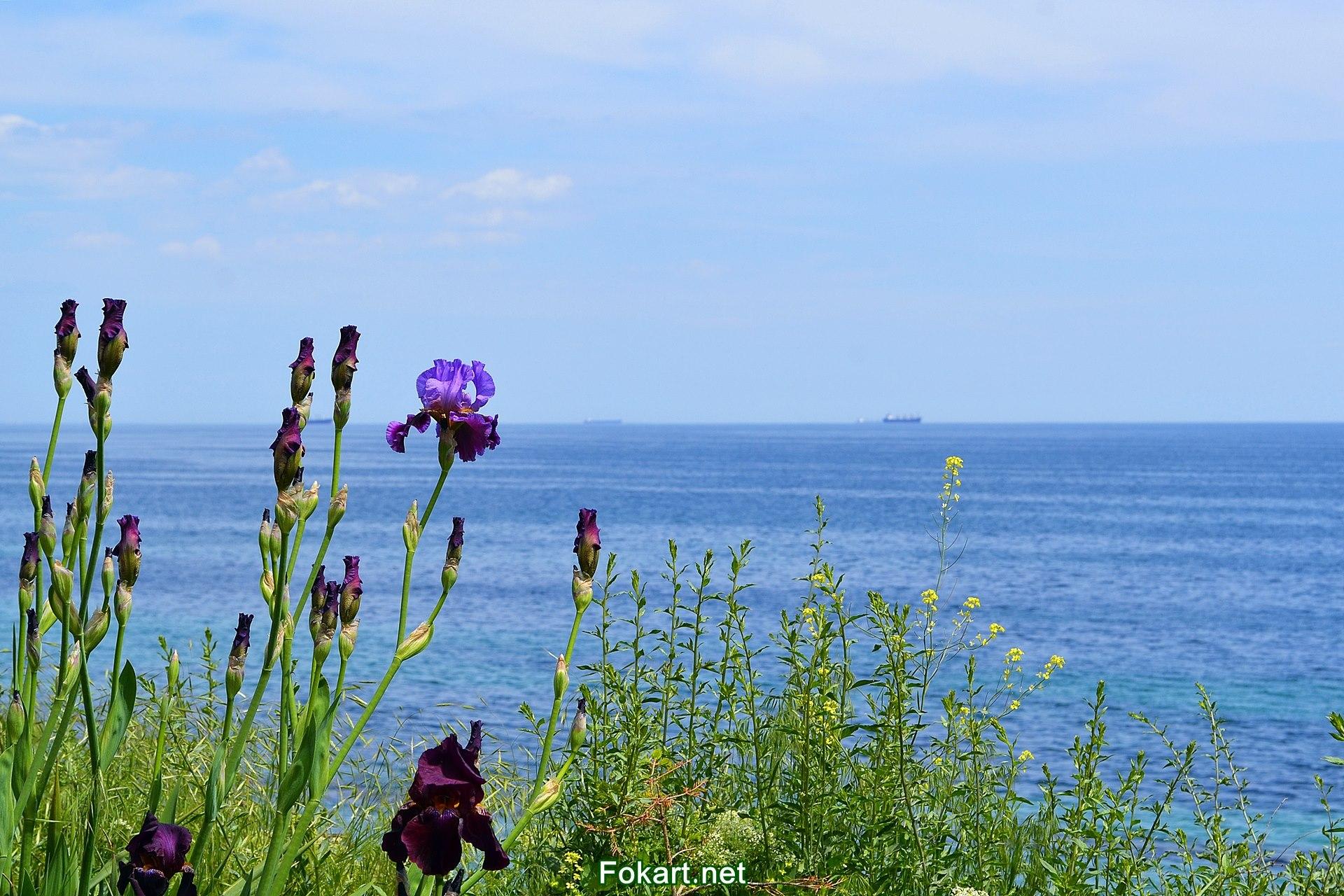 Ирисы, цветущие травы и морской горизонт.