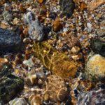 Морские камешки под водой на мелководье