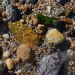 Мокрые морские камешки у самой кромки воды