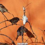 Воробышки среди зимней оттепели промочили перья