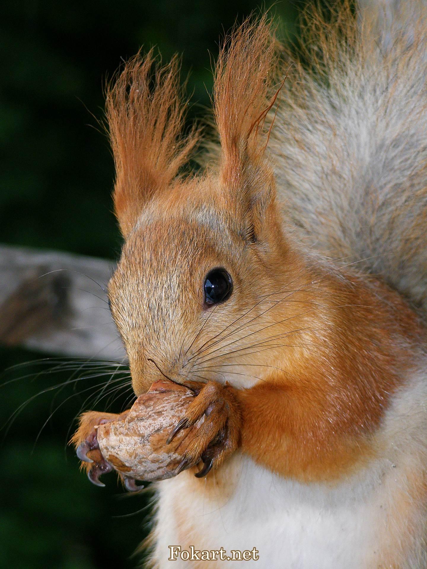 Промокший бельчонок с орешком