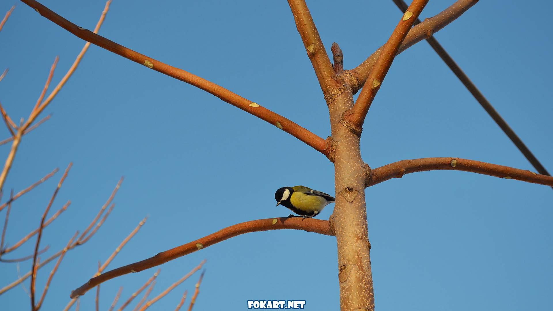 Синичка на дереве зимой