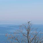 Сорока на верхушке дерева над морем