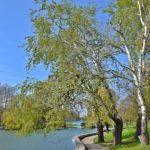 Весенние деревья у пруда и нежно-зелёная трава