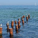 Чайки на старых сваях и море, морской пейзаж