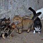 Бездомные кошки разных пород