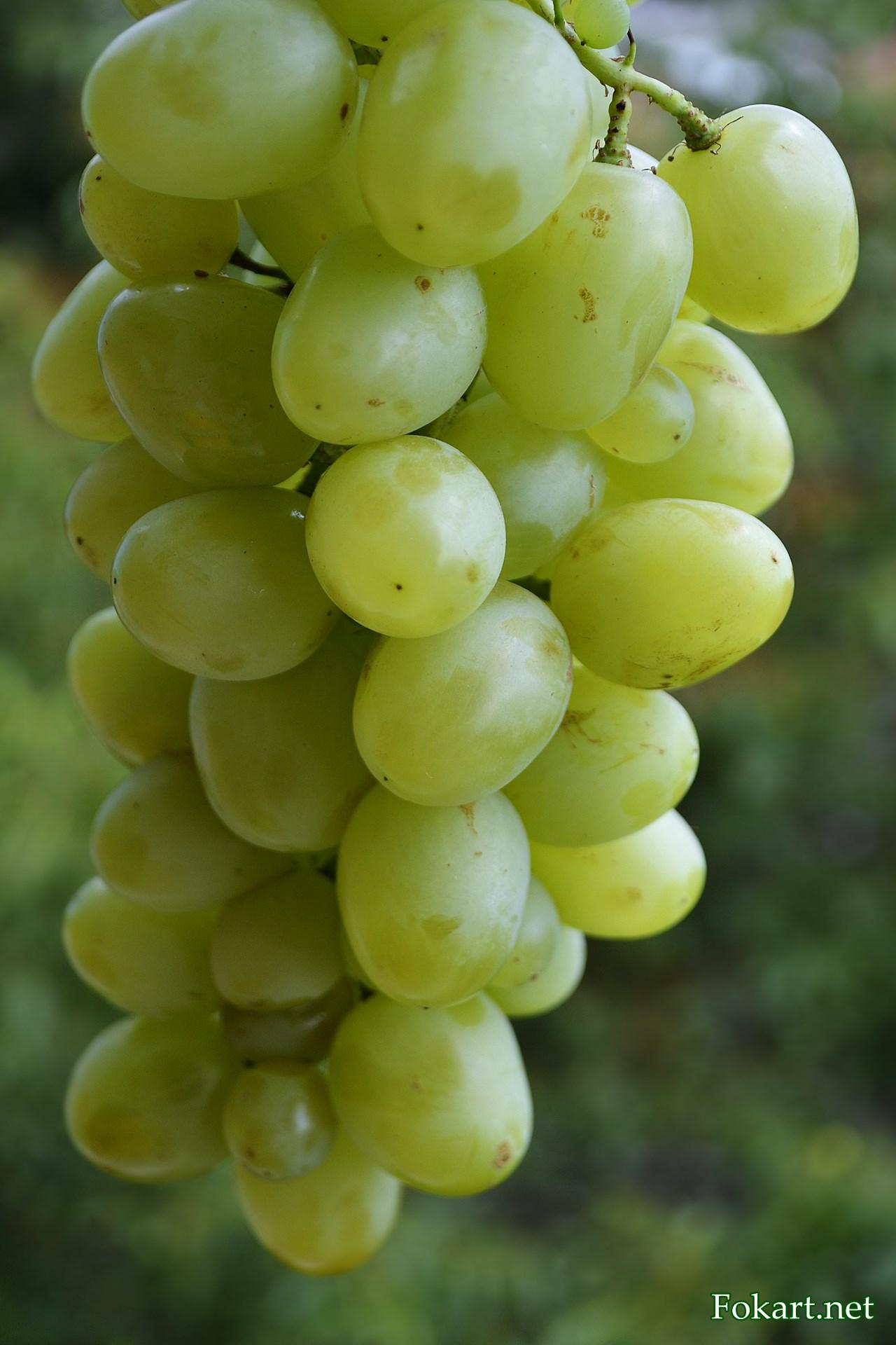 Гроздь крупного светлого винограда на фоне зелени
