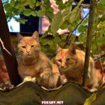Рыжие коты на крыше пристройки старого дома осенью.