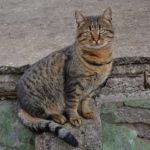 Добрый и дружелюбный взгляд бездомного кота