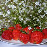 Клубника и мелкие белые цветочки
