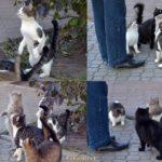 4 картинки-фрагмента кормления уличных кошек