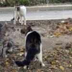 Воющие коты перед дракой