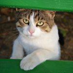 Котёнок у зелёной скамейки