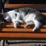 Кошка спит на скамейке в парке
