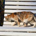 Кошка цвета осени