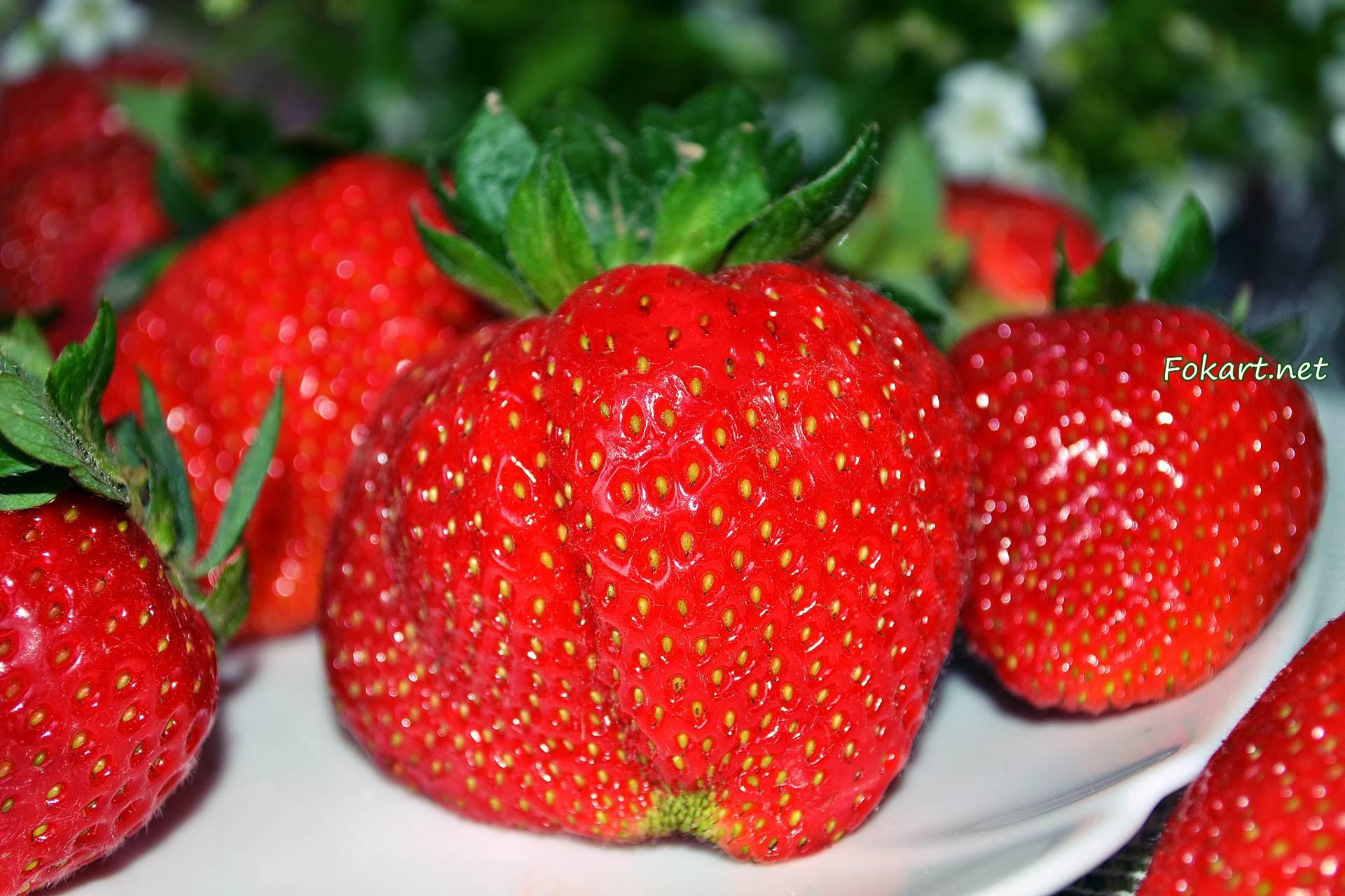 Крупная ягода клубники