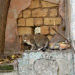 Полосатый бездомный кот, обитающий среди развалин