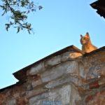 Рыжий кот на крыше старого дома