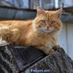 Рыжий уличный кот, отдыхающий на пеньке.