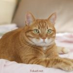 Рыжий кот отдыхает