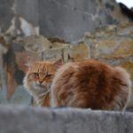 Рыжий уличный кот на крыше