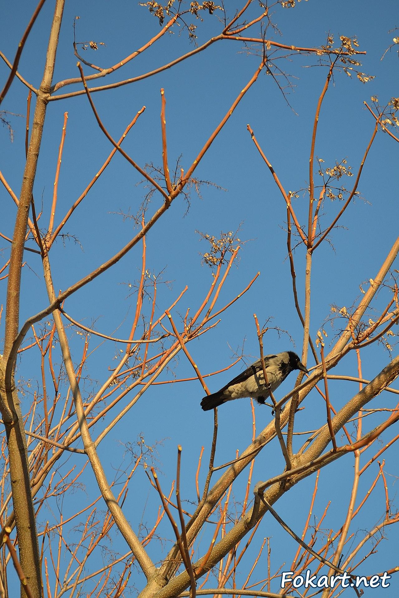 Серая ворона на ветке голого дерева