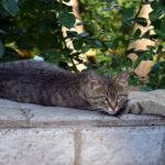 Серая кошка с зеленоватыми глазами грациозно растянулась