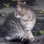Полосатая молодая кошка в ноябре