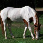 Бело-рыжая лошадь пасётся на зелёной траве