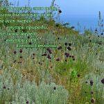 Красивая картинка природы со стихами Евтушенко
