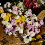 Букеты из мелких хризантем - белых, жёлтых, розовых