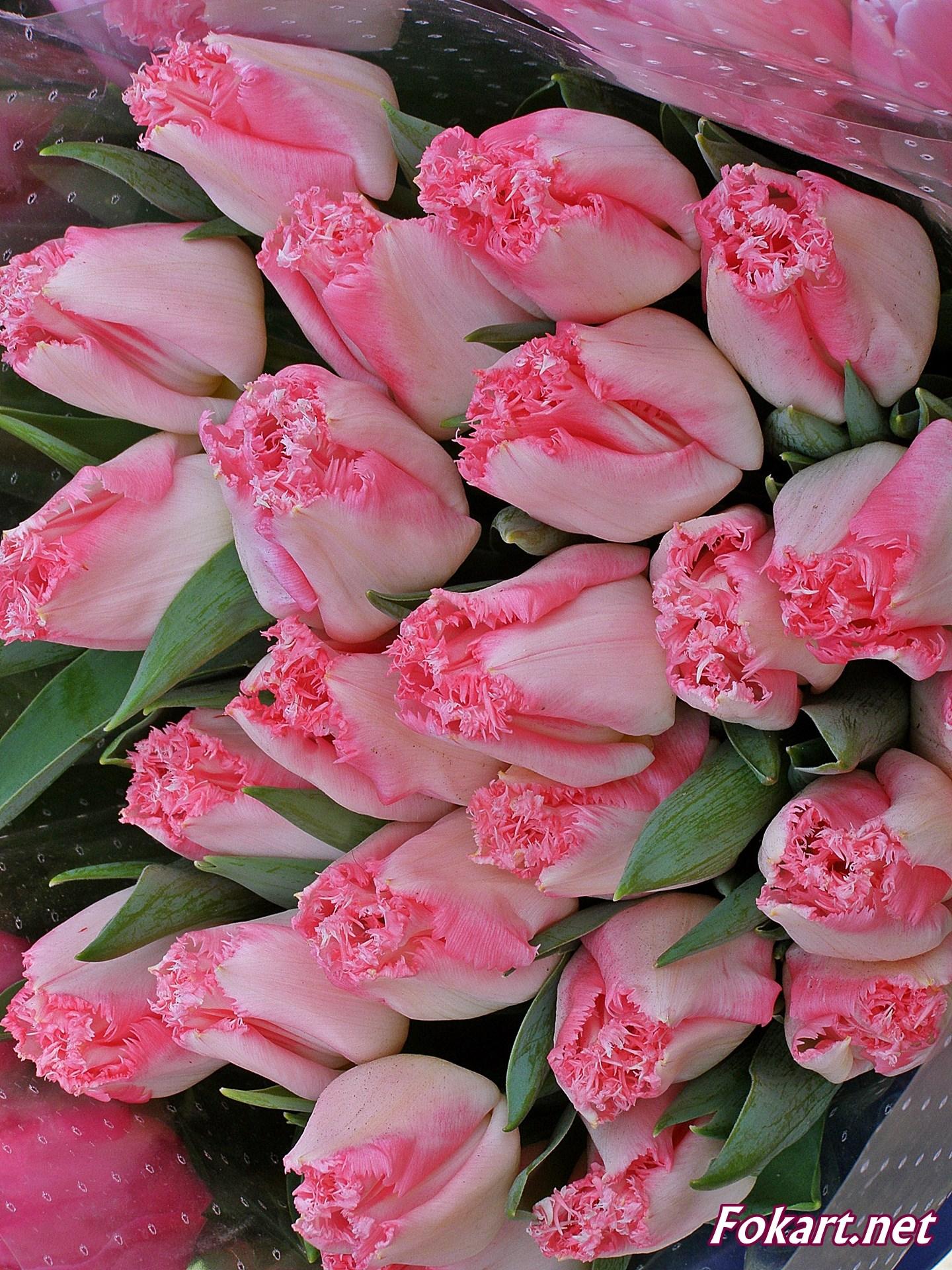 Букет необыкновенно красивых розовых тюльпанов