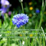 Василёк, картинка. Люби природу