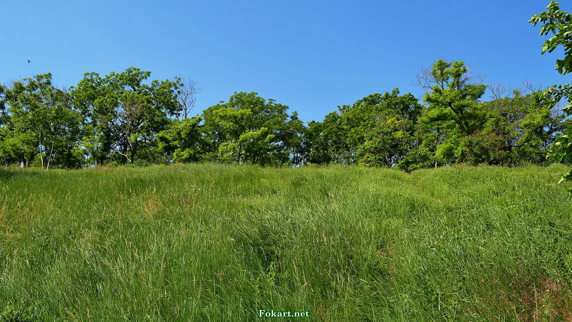 Высокие и густые травы в июне