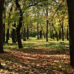 В осеннем парке первые листья упали на землю