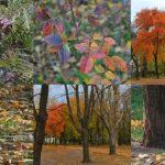 Фотоколлаж - 6 картинок - ворона, кошка у дерева, осенние шишки туи, листья шиповника и пейзажи с деревьями в начале ноября.