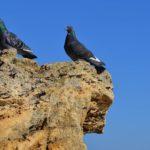 Два голубя на жёлтой скале на фоне синего неба