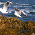 Две чайки на скалистом камне посреди моря.