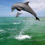 Дельфины прыгают