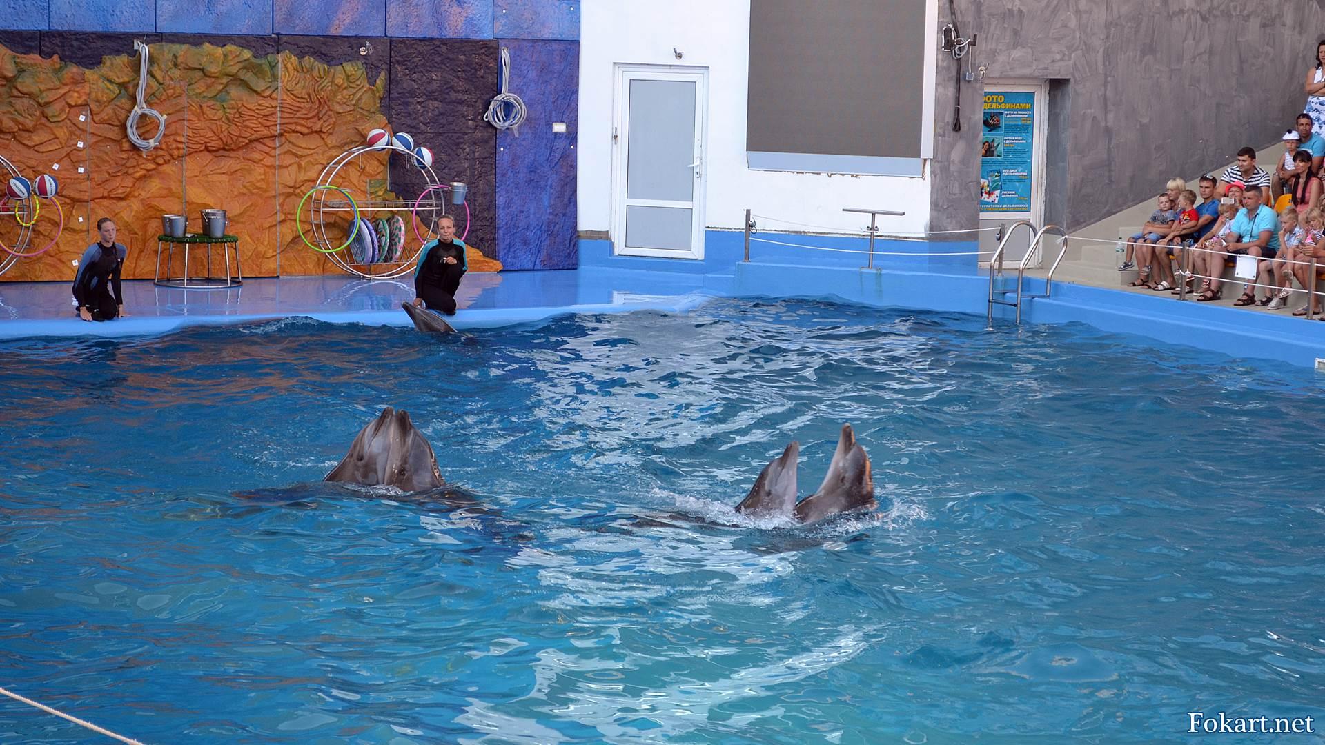 Дельфины танцуют парами медленный танец