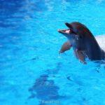 Дельфин резвится